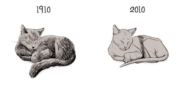 La chatte 1910 2010 chat