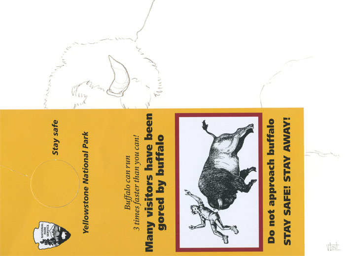 Yellowstone National Park bison buffalo balle plaquette informative Many visitors have been gored by buffalo do not approach buffalo stay safe stay away